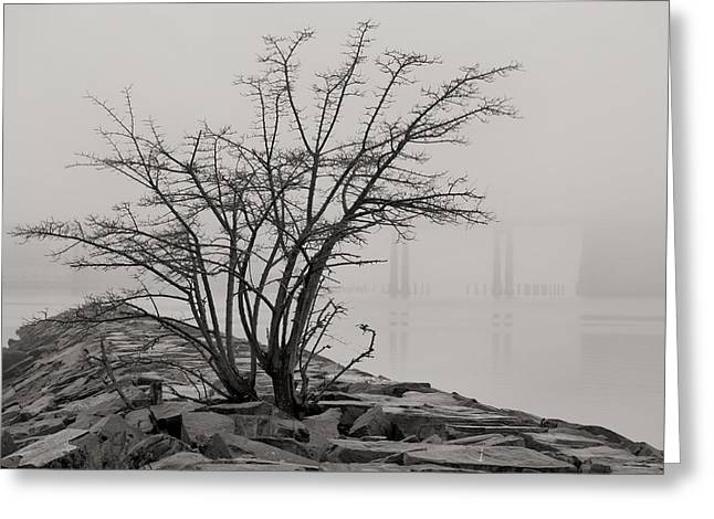 Foggy Day Greeting Cards - Solitary  Greeting Card by JC Findley