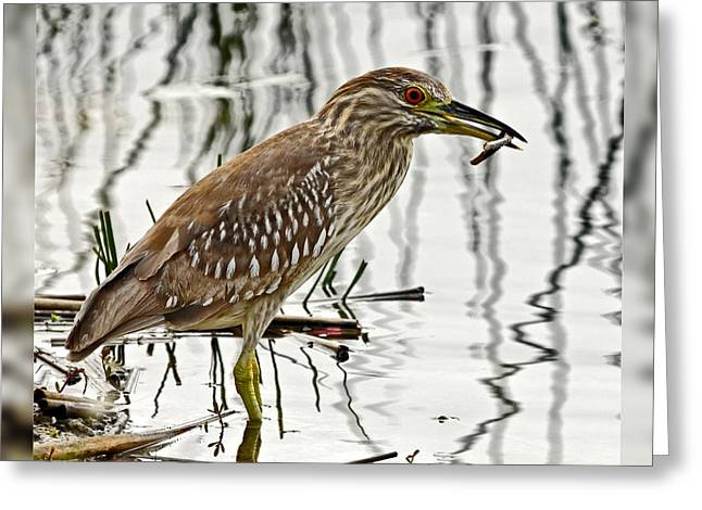 Juvenile Wall Decor Greeting Cards - Solitary Juvenile Greeting Card by Dawn Currie