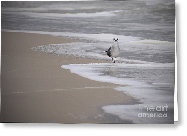 Gulf Of Mexico Greeting Cards - Solitary Greeting Card by Liz Masoner