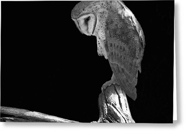 Bird Of Prey Greeting Card Greeting Cards - Solitary Owl Greeting Card by Suzanne Gaff