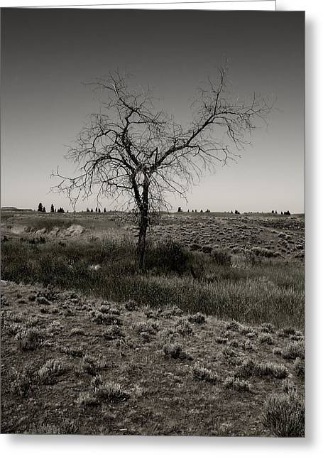 Spokane Greeting Cards - Solitary Tree Greeting Card by Daniel Hagerman