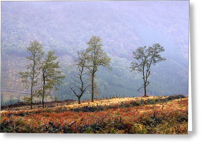 Deforestation Greeting Cards - Solitary Trees Greeting Card by Mikel Martinez de Osaba