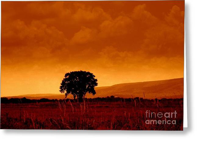 The Cornfield Greeting Cards - Solitude Greeting Card by Janine Riley