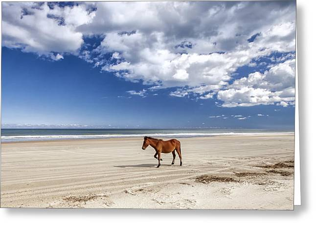 Wild Horses Greeting Cards - Solitude Greeting Card by Jay Wickens