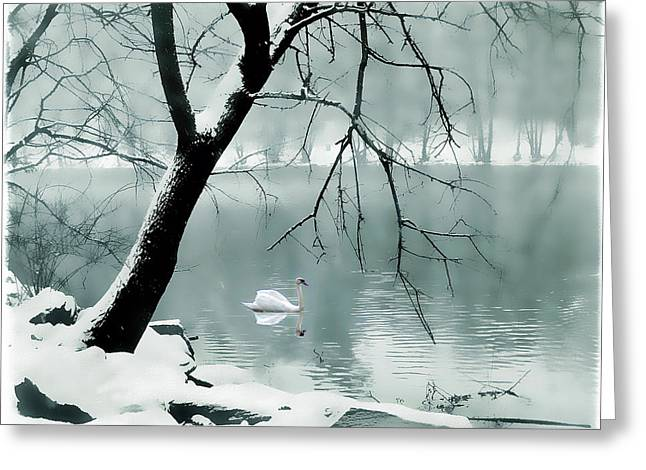 Swans... Greeting Cards - Solitude Greeting Card by Jessica Jenney