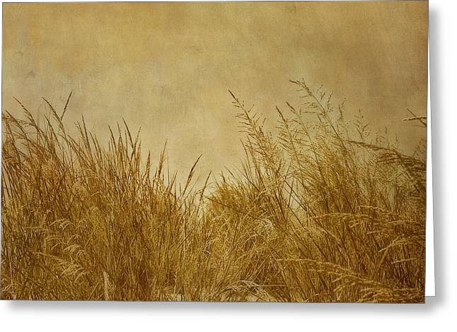Best Sellers -  - Kim Photographs Greeting Cards - Solitude Greeting Card by Kim Hojnacki