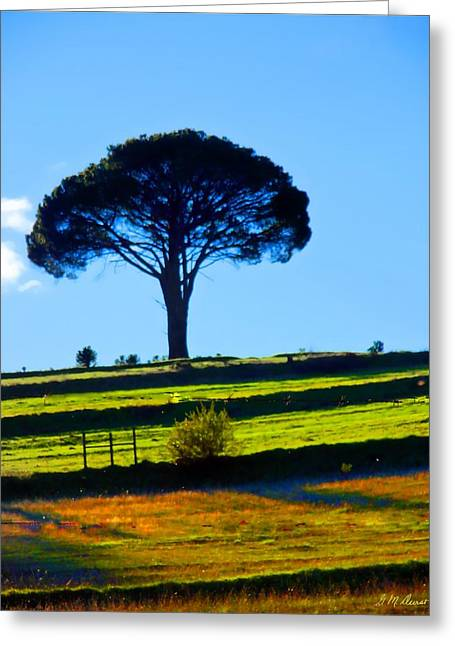 Solitude Greeting Card by Michael Durst