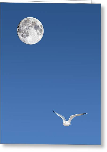 Sea Moon Full Moon Greeting Cards - Solitude Greeting Card by Michael Peychich
