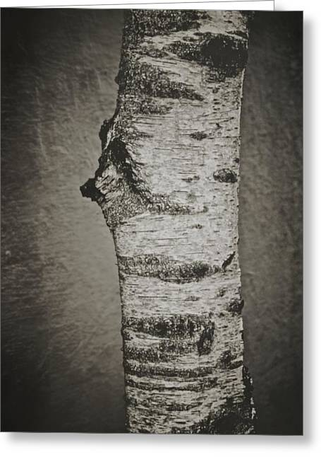 Birch Tree Greeting Cards - Solitude Greeting Card by Odd Jeppesen