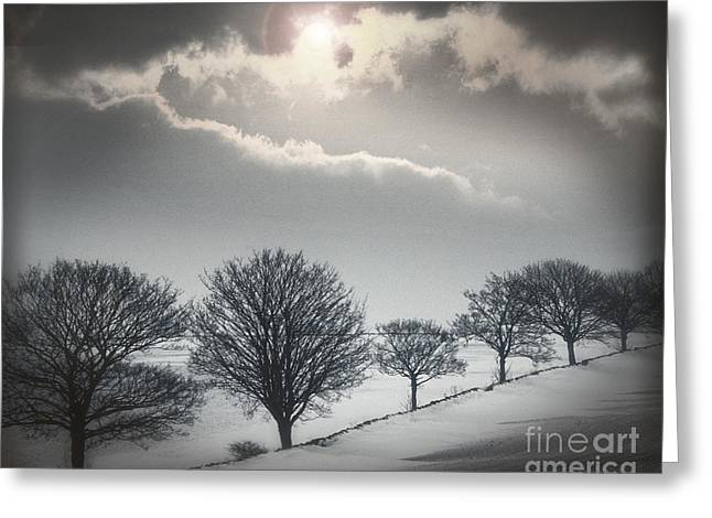 Wintry Greeting Cards - Solitude of Coldness Greeting Card by Edmund Nagele