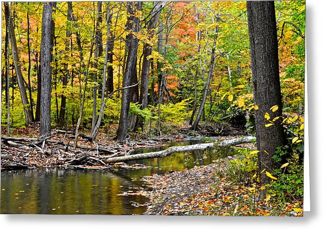 Terrific Greeting Cards - Solitude Greeting Card by Frozen in Time Fine Art Photography
