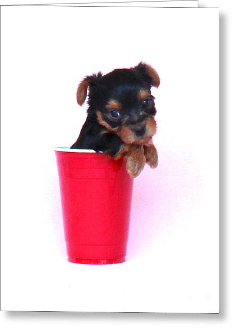 Photo Art Gallery Greeting Cards - Solo Cup Pup  Greeting Card by Lorna Rogers Photography