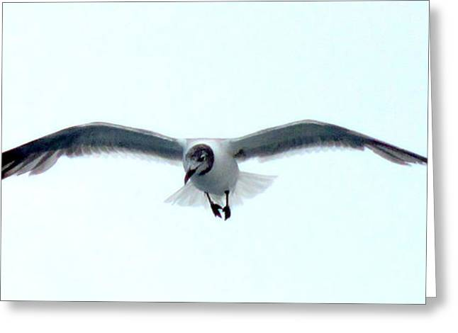 Sea Birds Greeting Cards - Solo Flight Greeting Card by Randall Weidner