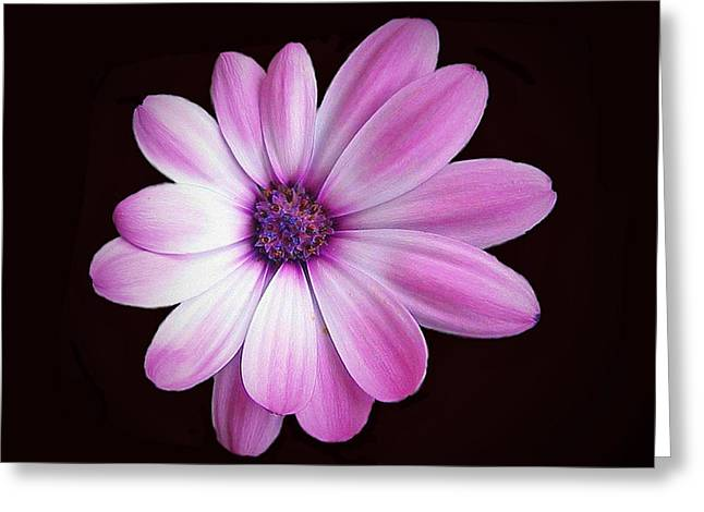Floral Photographs Mixed Media Greeting Cards - Solo Purple Flower Greeting Card by Dennis Buckman
