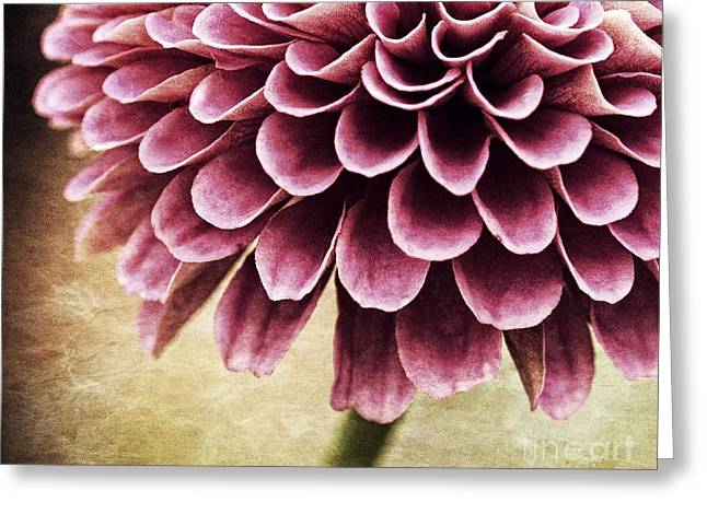 Zinnia Elegans Greeting Cards - Somber Beauty Greeting Card by Chris Fleming