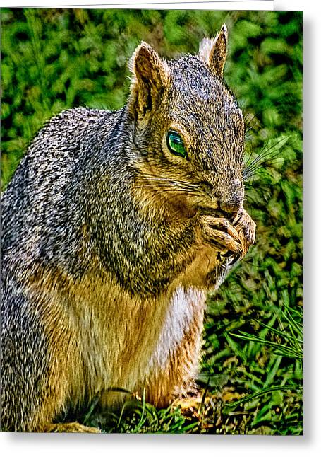 Cathedral Rock Greeting Cards - SOME Squirrels are Big Greeting Card by  Bob and Nadine Johnston