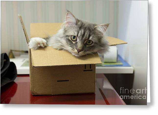 Cardboard Greeting Cards - Somebody sent me a cat Greeting Card by Louise Heusinkveld