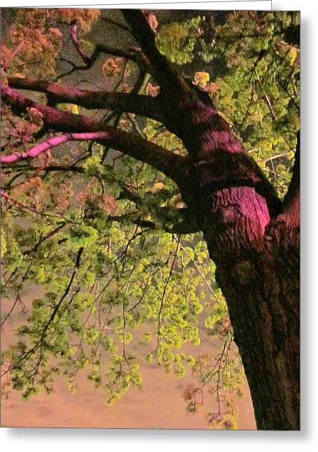 Eerie Greeting Cards - Something About The Trees Greeting Card by Guy Ricketts