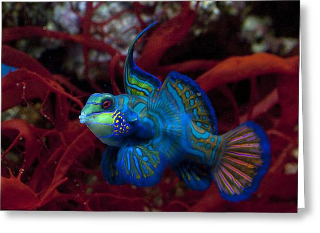 Goby Greeting Cards - Something Fishy Greeting Card by James Roemmling