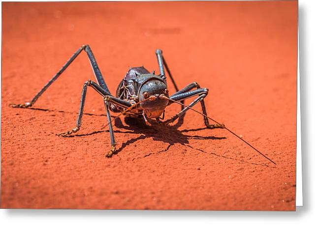 Something To Bug You - Armored Katydid Photograph Greeting Card by Duane Miller