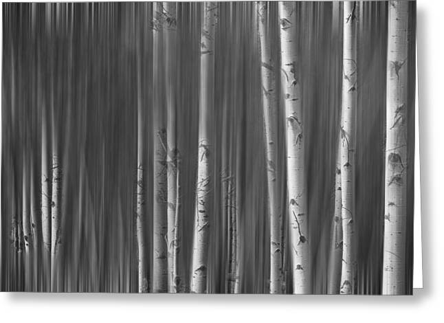 Autumn Prints Greeting Cards - Somewhere Along the Road Dreaming BW Greeting Card by James BO  Insogna