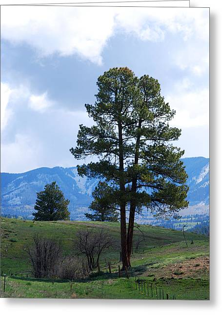 Becky Greeting Cards - #somewhereincolorado Greeting Card by Becky Furgason