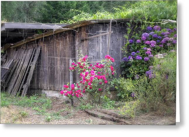 Pinot Noir Greeting Cards - Somewhere near Geyserville CA Greeting Card by Joan Carroll