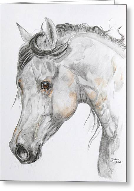 Arabian Horse Original Greeting Cards - Son of the Wind Greeting Card by Janina  Suuronen