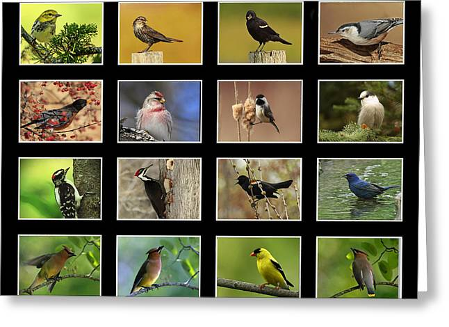 Song Birds Of Canada Collection Greeting Card by Inspired Nature Photography Fine Art Photography