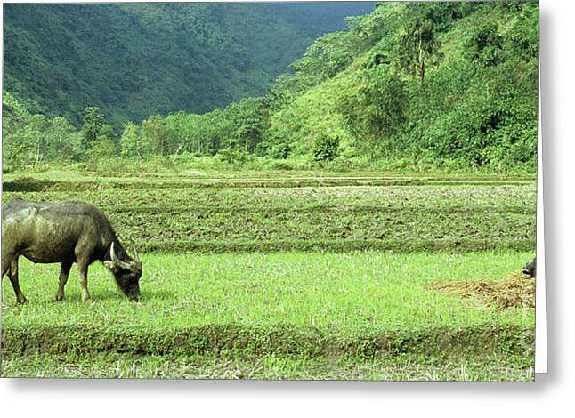 Viet Nam Greeting Cards - Song Chay Valley Greeting Card by Rick Piper Photography