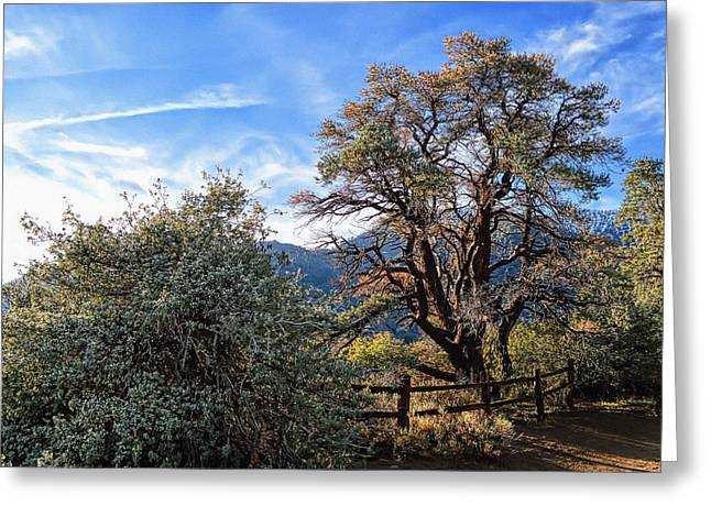 Angeles Forest Greeting Cards - Song Of A Desert Morning Greeting Card by Glenn McCarthy