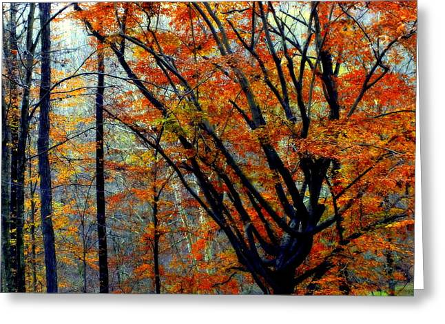 Leaf Change Greeting Cards - SONG of AUTUMN Greeting Card by Karen Wiles