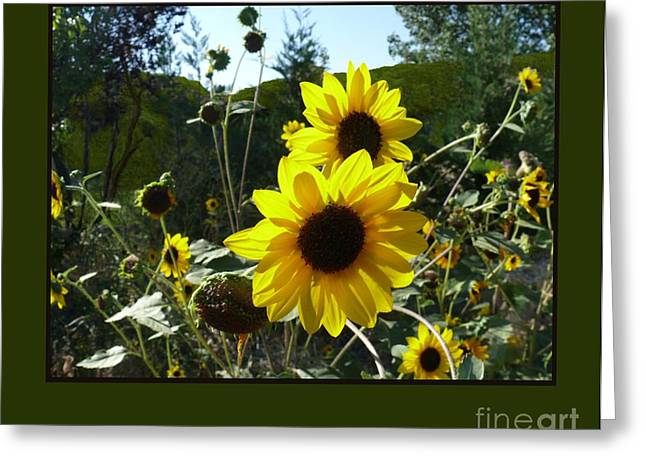 Song Of The Sunflower Greeting Card by Jacquelyn Roberts