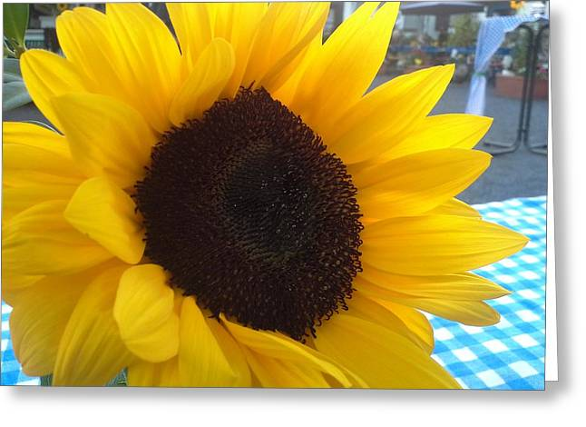 Sonnenblume Greeting Card by Klaas Hartz