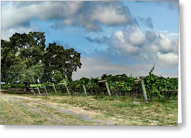 Pinot Noir Greeting Cards - Sonoma County Life Greeting Card by Stan Angel