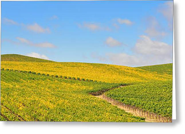 Sonoma County Vineyards. Greeting Cards - Sonoma County Vineyard Panorama Greeting Card by Michael  Ayers