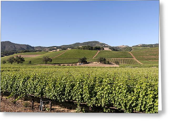 Sonoma Greeting Cards - Sonoma County Vineyards Greeting Card by Carol M Highsmith