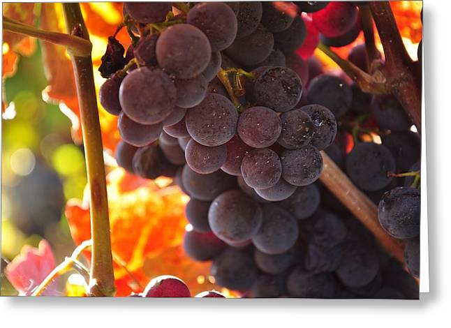 Sonoma Photographs Greeting Cards - Sonoma grapes Greeting Card by Michael Dyer