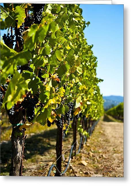 Grape Vineyard Greeting Cards - Sonoma Grapes Greeting Card by Wayne Kondoff