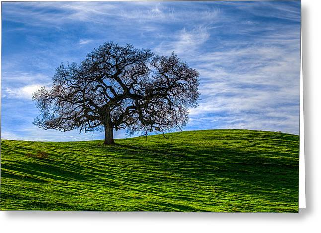 Sonoma Tree Greeting Card by Chris Austin