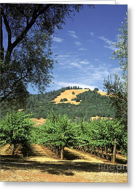 Sonoma Valley Vineyard Greeting Card by Craig Lovell