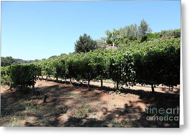 Valley Of The Moon Photographs Greeting Cards - Sonoma Vineyards In The Sonoma California Wine Country 5D24499 Greeting Card by Wingsdomain Art and Photography