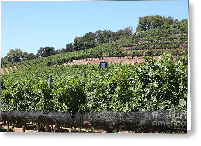 Valley Of The Moon Photographs Greeting Cards - Sonoma Vineyards In The Sonoma California Wine Country 5D24503 Greeting Card by Wingsdomain Art and Photography
