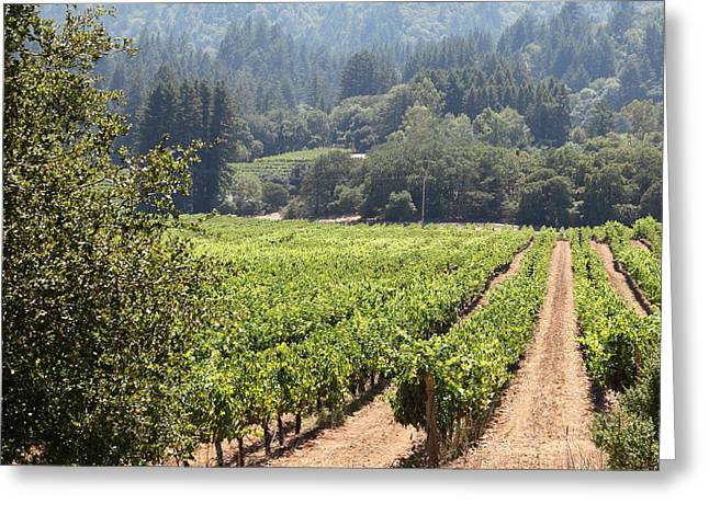 Pastoral Vineyards Greeting Cards - Sonoma Vineyards In The Sonoma California Wine Country 5D24515 square Greeting Card by Wingsdomain Art and Photography