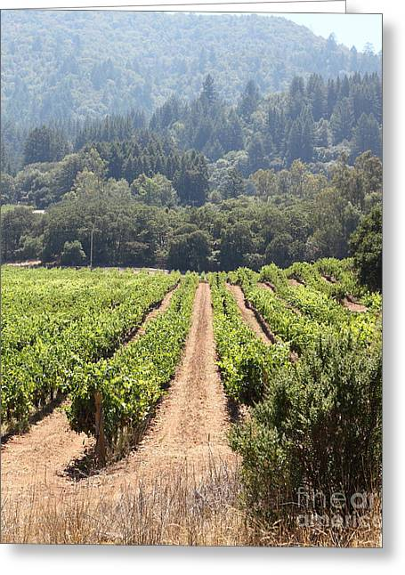 Valley Of The Moon Photographs Greeting Cards - Sonoma Vineyards In The Sonoma California Wine Country 5D24515 vertical Greeting Card by Wingsdomain Art and Photography