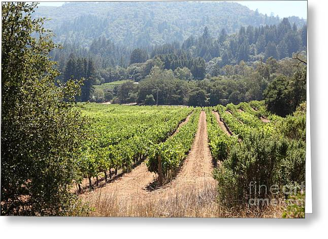 Valley Of The Moon Photographs Greeting Cards - Sonoma Vineyards In The Sonoma California Wine Country 5D24515 Greeting Card by Wingsdomain Art and Photography