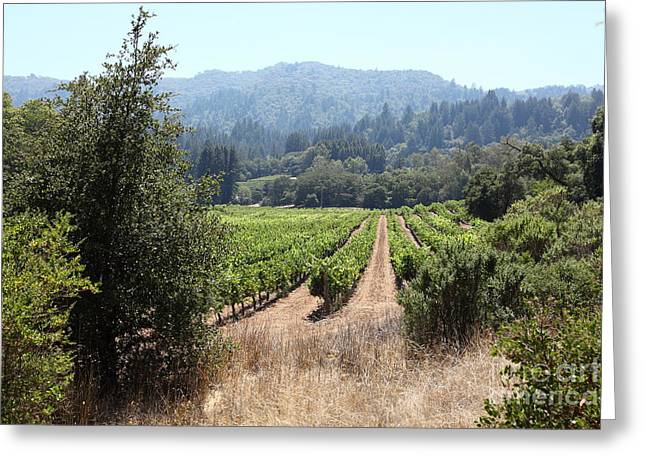 Sonoma Vineyards In The Sonoma California Wine Country 5d24516 Greeting Card by Wingsdomain Art and Photography