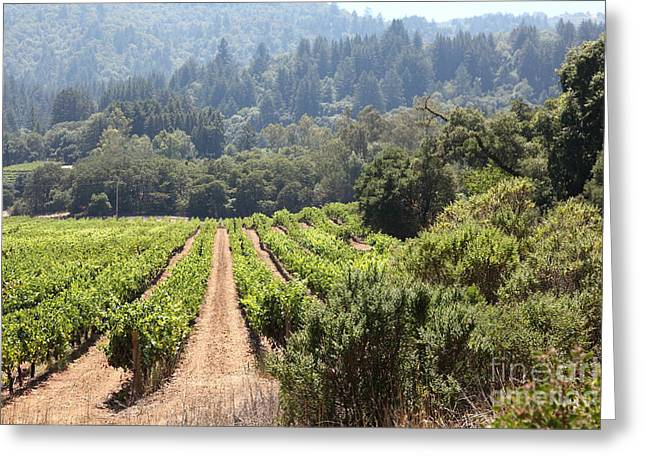 Pastoral Vineyard Greeting Cards - Sonoma Vineyards In The Sonoma California Wine Country 5D24518 Greeting Card by Wingsdomain Art and Photography