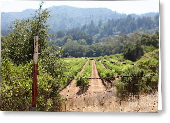 Pastoral Vineyard Greeting Cards - Sonoma Vineyards In The Sonoma California Wine Country 5D24521 Greeting Card by Wingsdomain Art and Photography