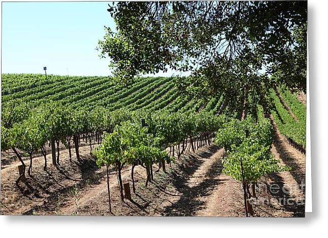 Pastoral Vineyard Greeting Cards - Sonoma Vineyards In The Sonoma California Wine Country 5D24594 Greeting Card by Wingsdomain Art and Photography